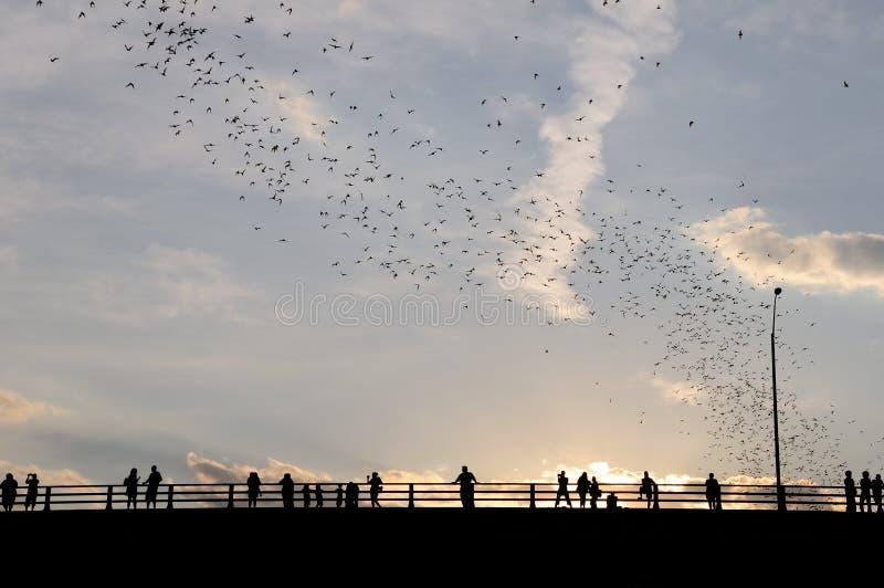 Exode de 'bat' photos stock