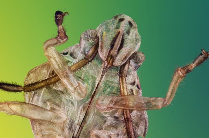 Exoskeleton van insect stock foto