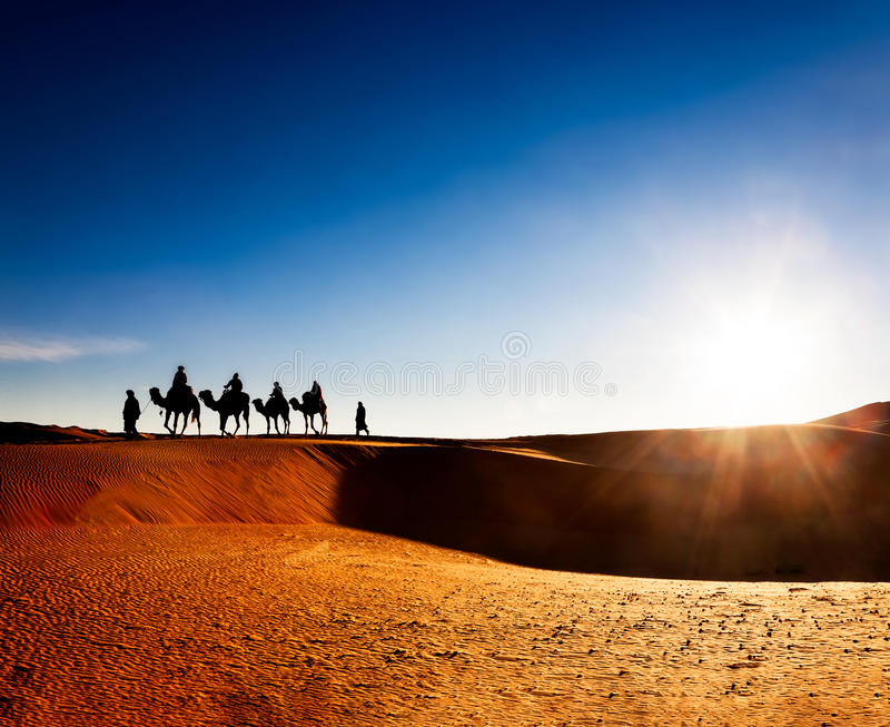 Exotic adventure: turist riding camels on sand dunes in desert at sunrise. stock photos