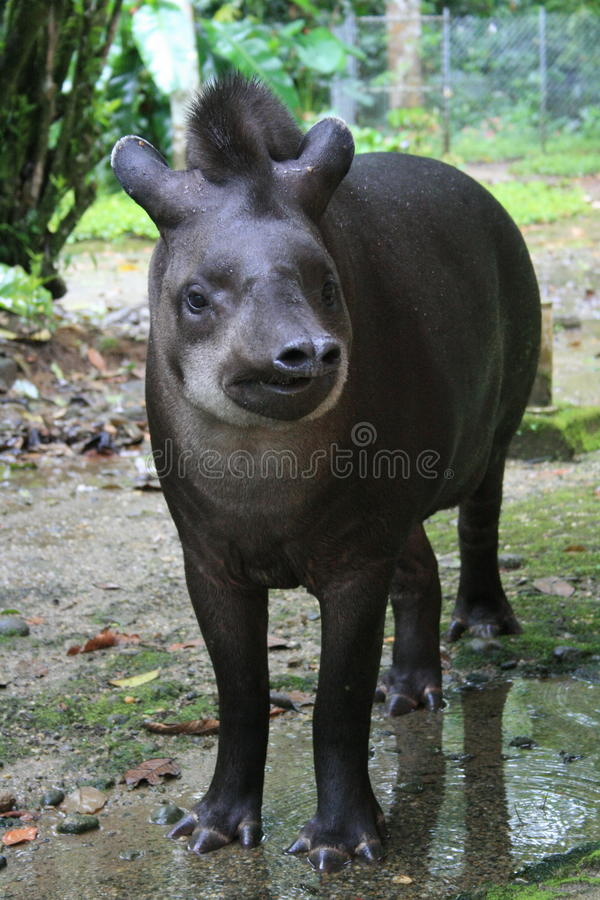 Exotic animal royalty free stock photo