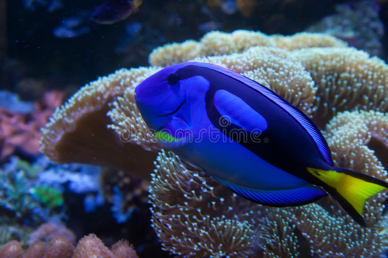 Download Exotic aquarium fish stock image. Image of bright, aquarian - 19784191