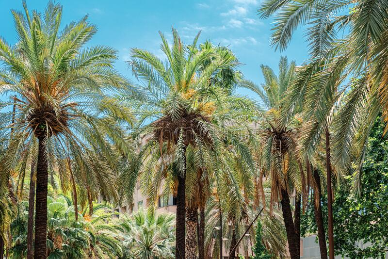Exotic Architecture And Tropical Street Palm Trees stock photo