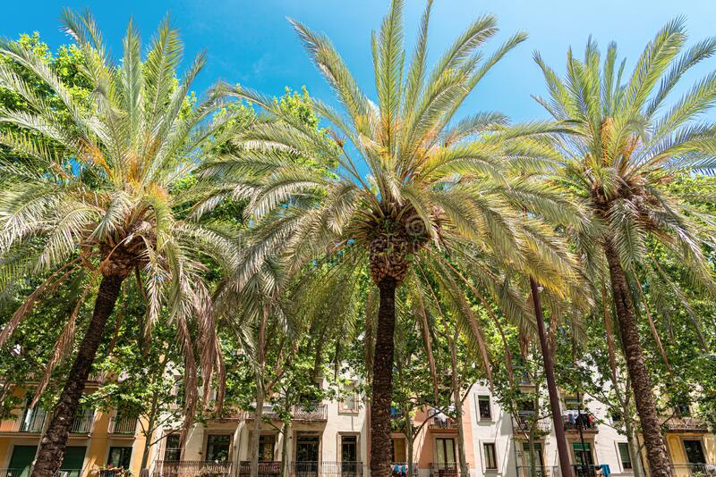 Exotic Architecture And Tropical Palm Trees Downtown Barcelona City stock images