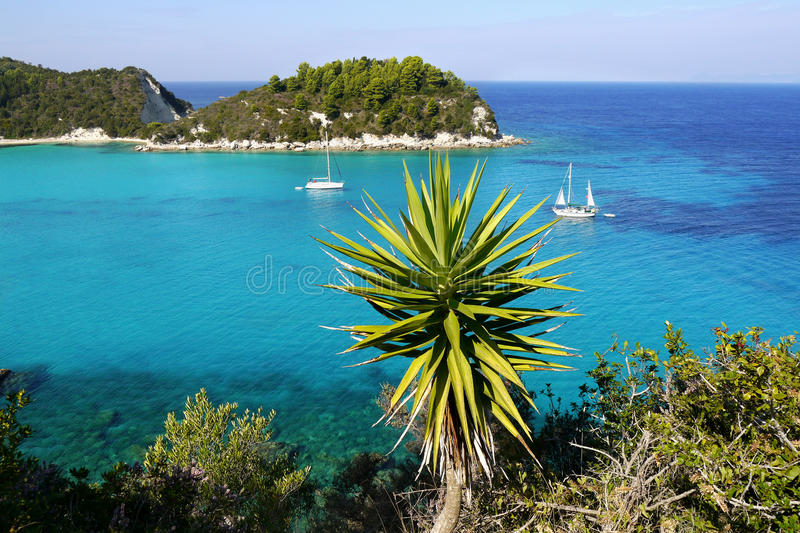 Download Exotic beach stock photo. Image of palm, resort, summer - 48275752