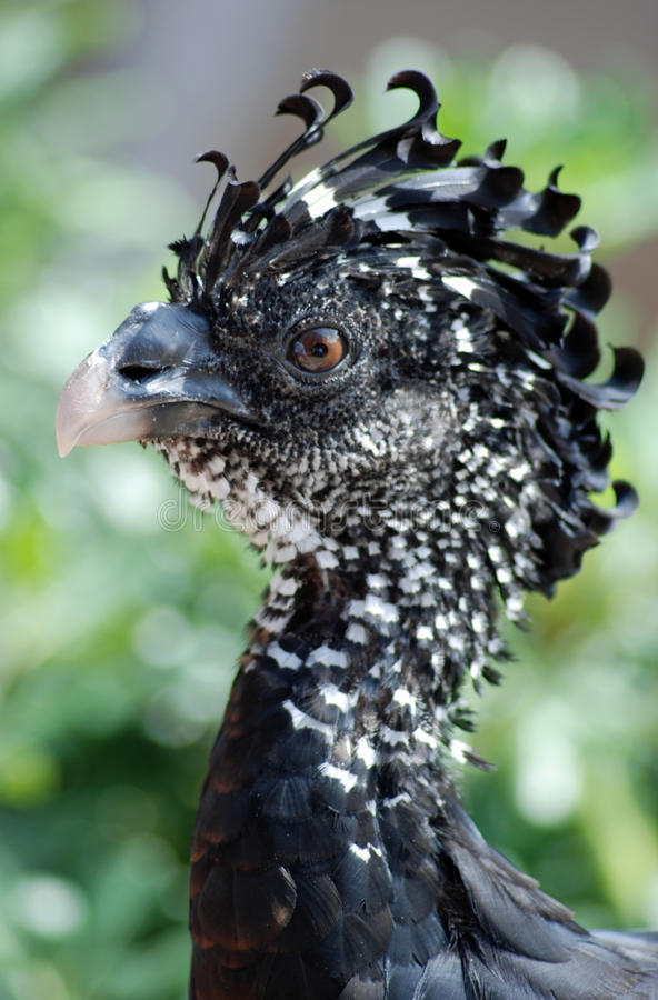Exotic Bird Royalty Free Stock Photography
