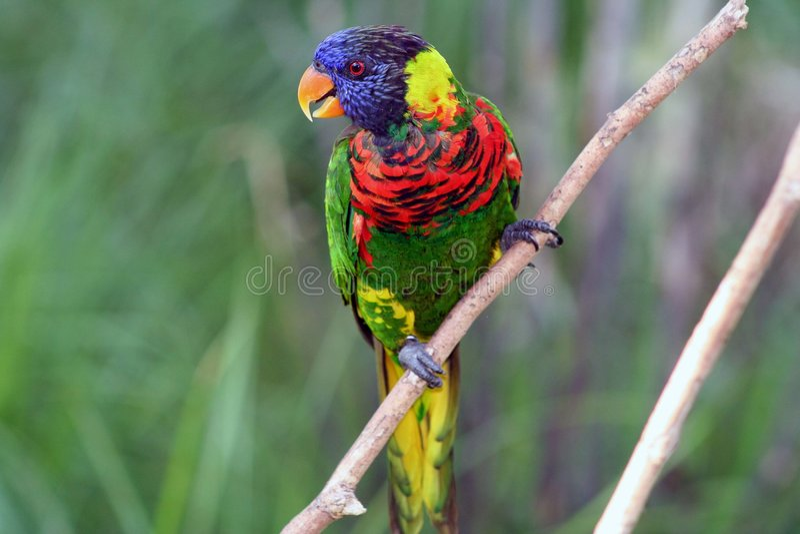 Exotic Bird stock image