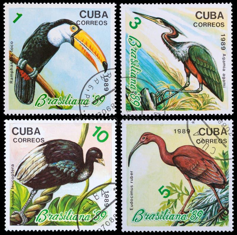 Exotic bird stock photo