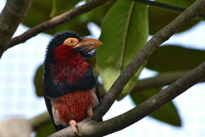 Exotic bird London Zoo royalty free stock images