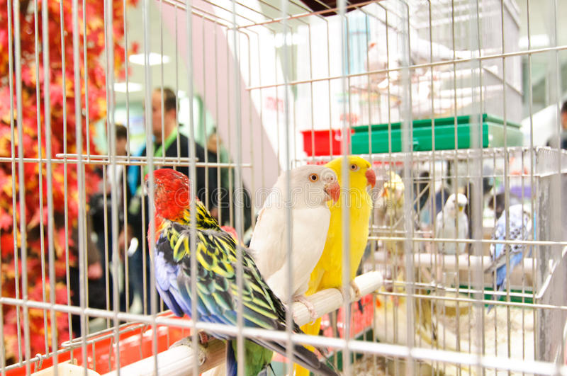 Exotic Birds At GRAN Balkan Cup Competition Editorial Photo