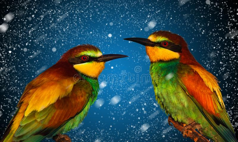Exotic birds on New Year`s background royalty free stock photography