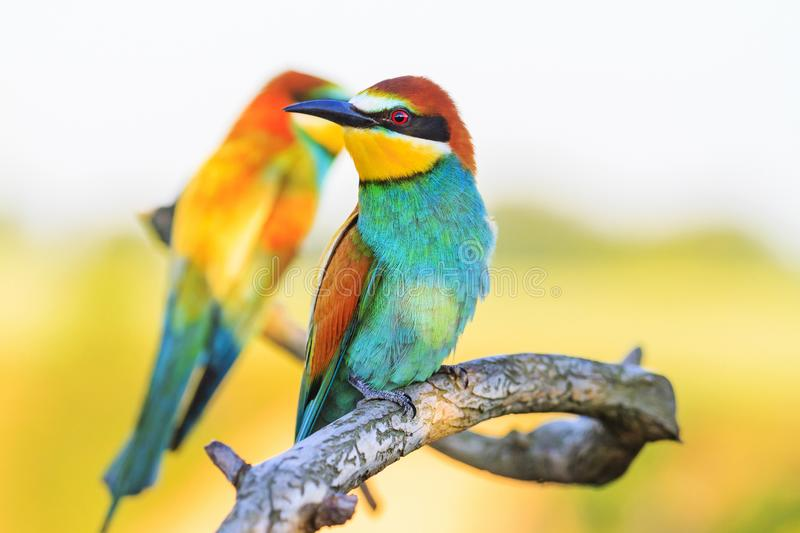 Exotic birds are sitting on a branch with patterns stock photos