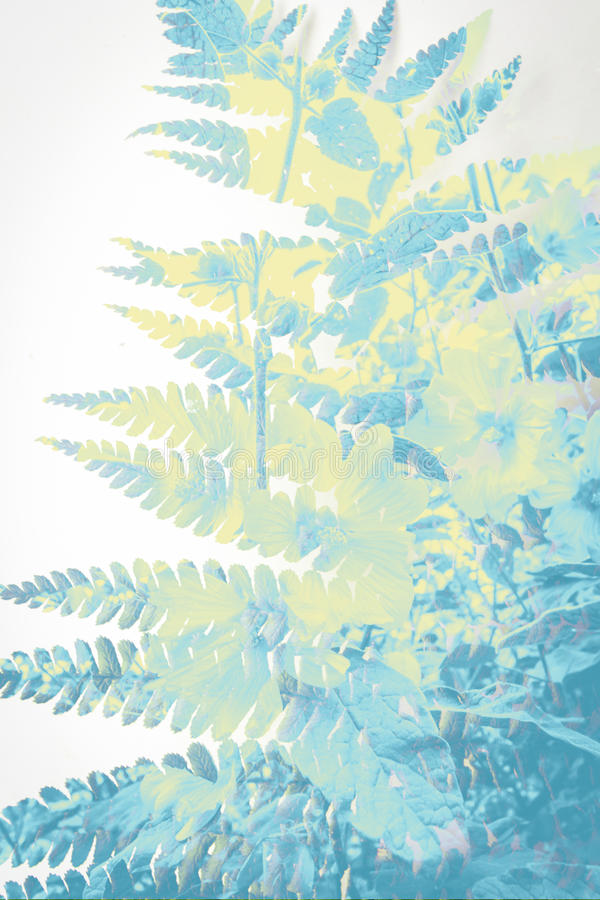 Exotic blue plants background stock photo