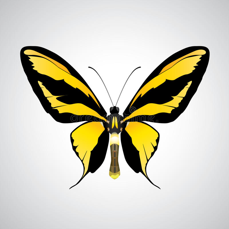 Download Exotic butterflies stock vector. Image of abdomen, beautiful - 13210266