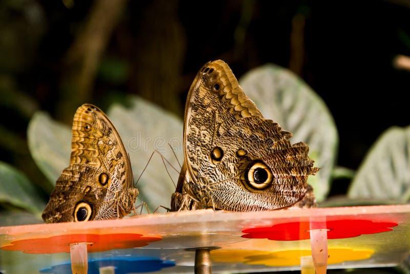 Exotic butterflies stock photos