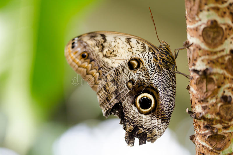 Exotic butterflies extreme macro shots in vibrant colors. Pale o royalty free stock photos