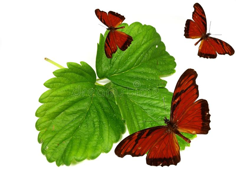 Exotic butterflies on fresh green leaves stock image