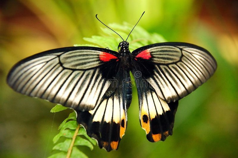 An exotic butterfly. stock photos