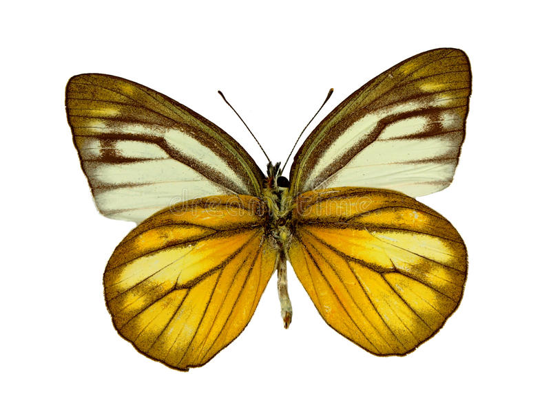 Download Exotic butterfly stock image. Image of outdoor, macro - 12050687