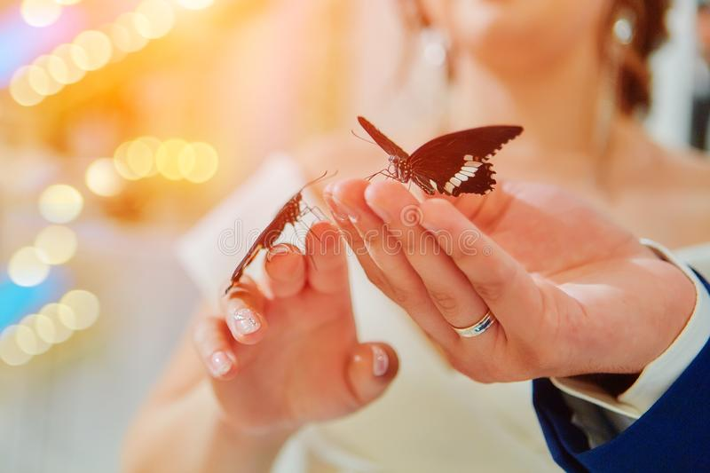 Exotic butterfly. Beautiful live butterflies sit on the hands of the bride and groom. Received as a gift at the wedding Banquet stock photos