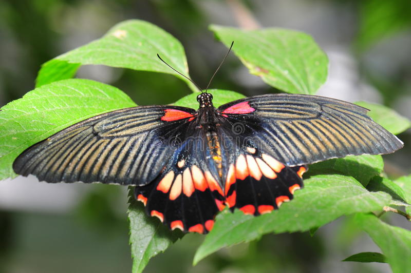 Exotic butterfly with bright colorful wings. Beautiful butterfly with open wings stock images
