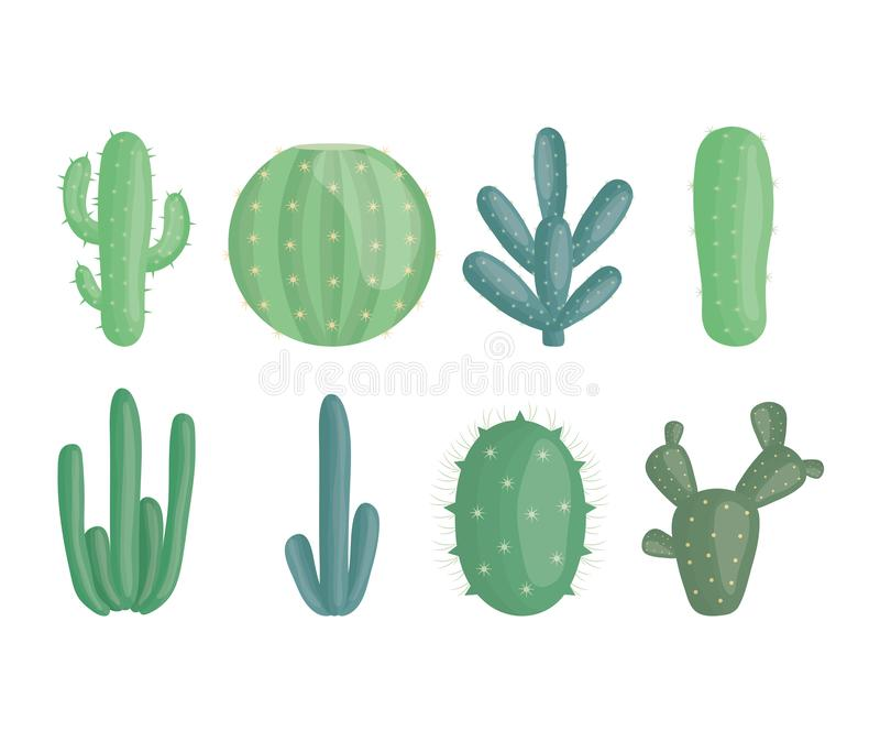 Exotic cactus plants in ceramic pots royalty free illustration