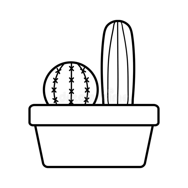 Exotic cactus plants in square ceramic pot. Vector illustration design stock illustration