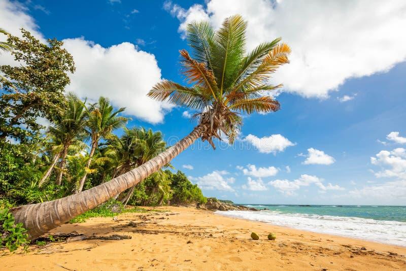 Exotic carribean shore of Puerto Rico Flamenco beach. Shore royalty free stock photos