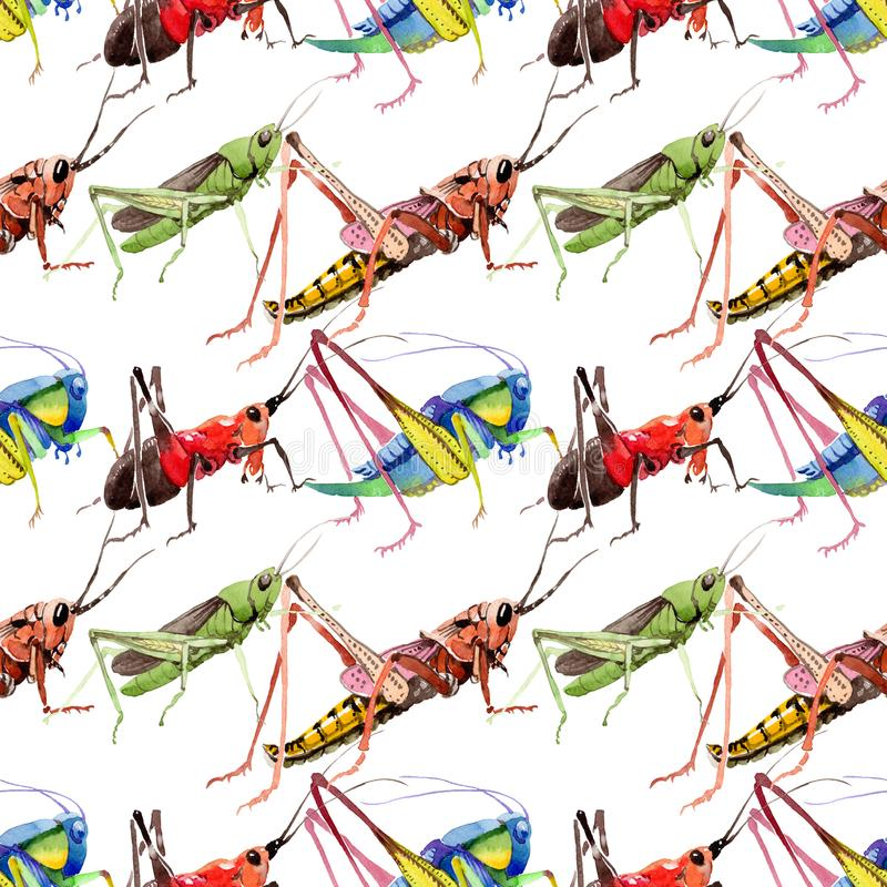 Exotic crickets wild insect in a watercolor style pattern. Full name of the insect: crickets, grasshoppers . Aquarelle wild insect for background, texture vector illustration