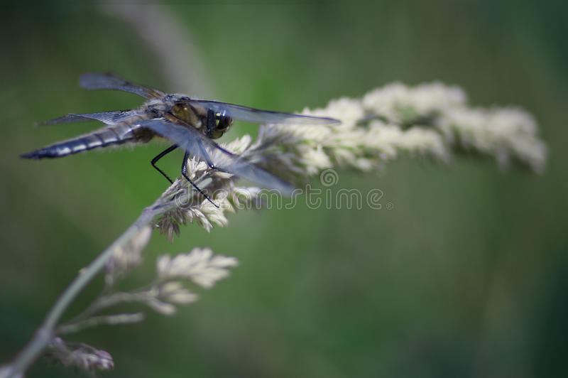 Exotic dragonfly stock photo