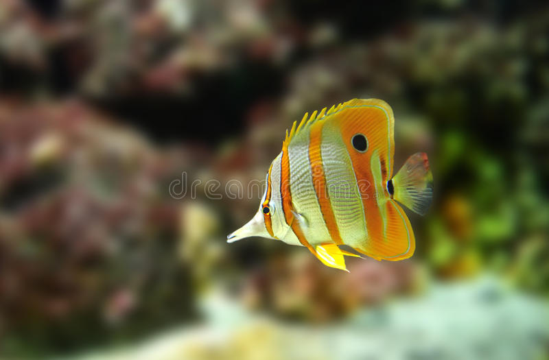 Download Exotic fish stock photo. Image of purity, water, transparent - 15157656