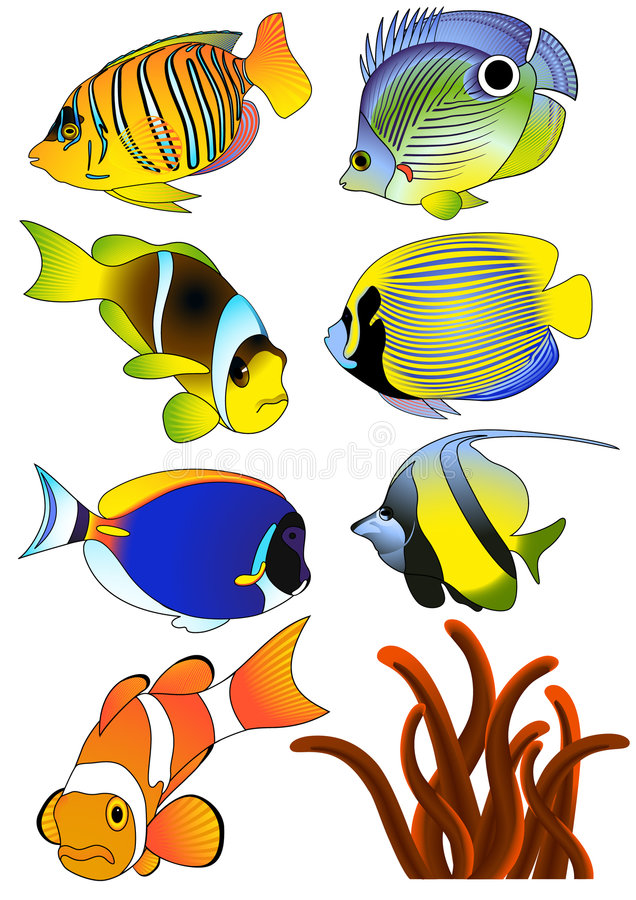 Download Exotic fish stock vector. Image of water, painting, saltwater - 4407680