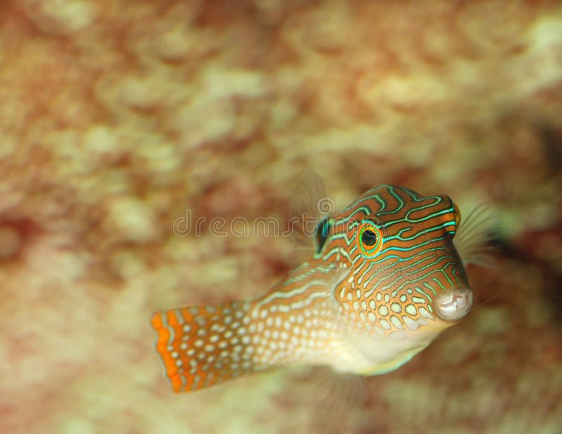 Download Exotic fish stock image. Image of saltwater, life, fish - 5384935