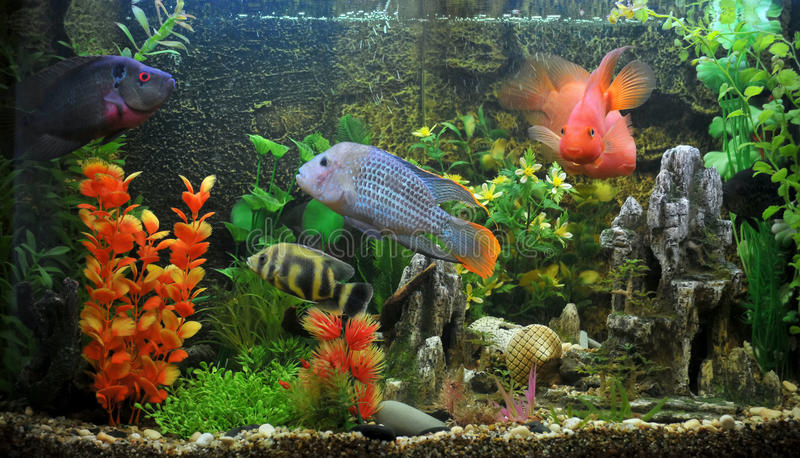 Download Exotic Fish Royalty Free Stock Photos - Image: 9531188