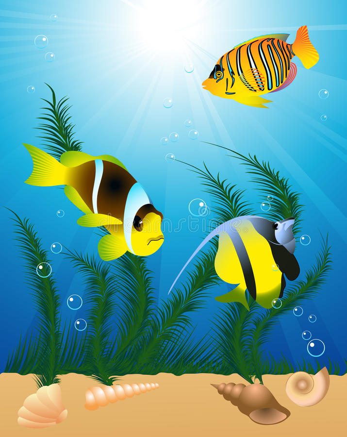 Download Exotic fish under water stock vector. Illustration of illustration - 9733464