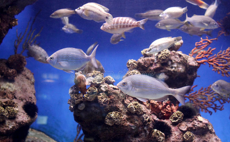 Exotic fishes royalty free stock photo
