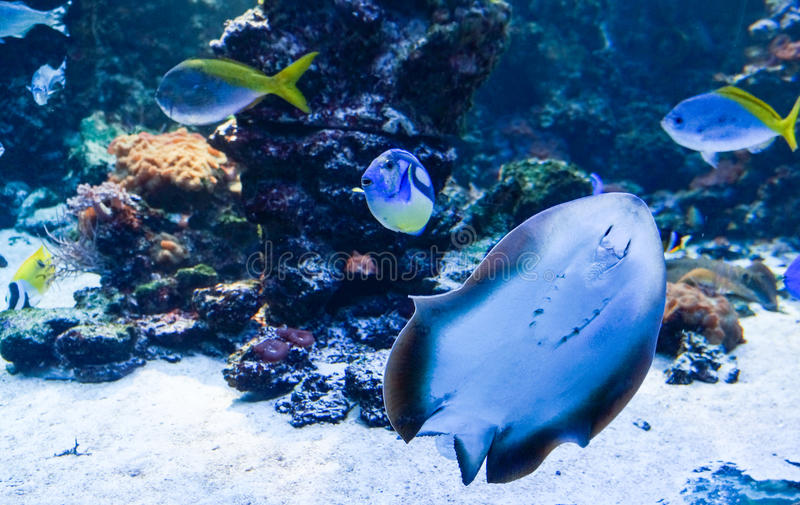 Exotic fishes in the ocean stock images
