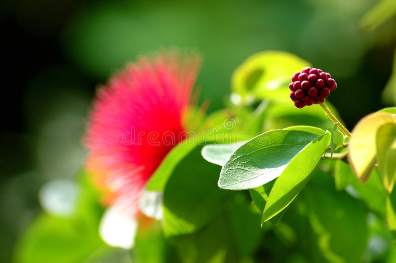 Download Exotic flower stock image. Image of exotic, green, gentle - 117765