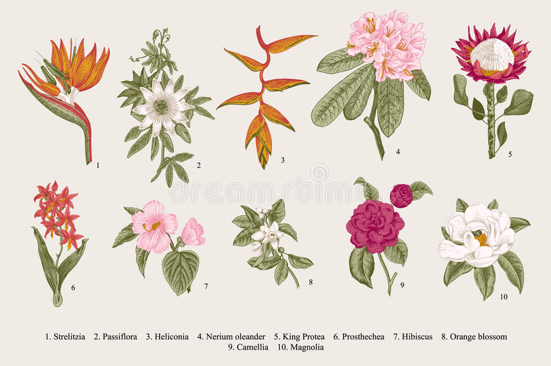 Exotic flowers set. Botanical vector vintage illustration. royalty free illustration