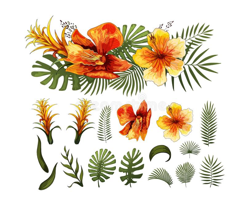 Exotic Flowers, Tropical Leaves design elements. Vector floral illustrations. Exotic Flowers, Tropical Leaves. Orchids and Frangipani, Hawaiian plants. Monstera