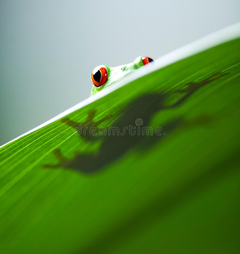 Exotic frog on colorful background.  royalty free stock images