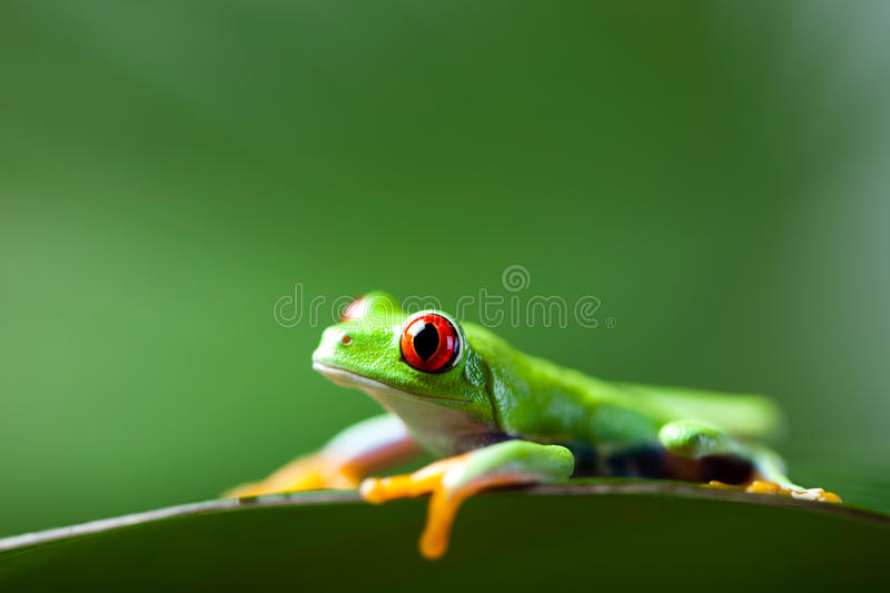 Exotic frog on colorful background.  stock photo