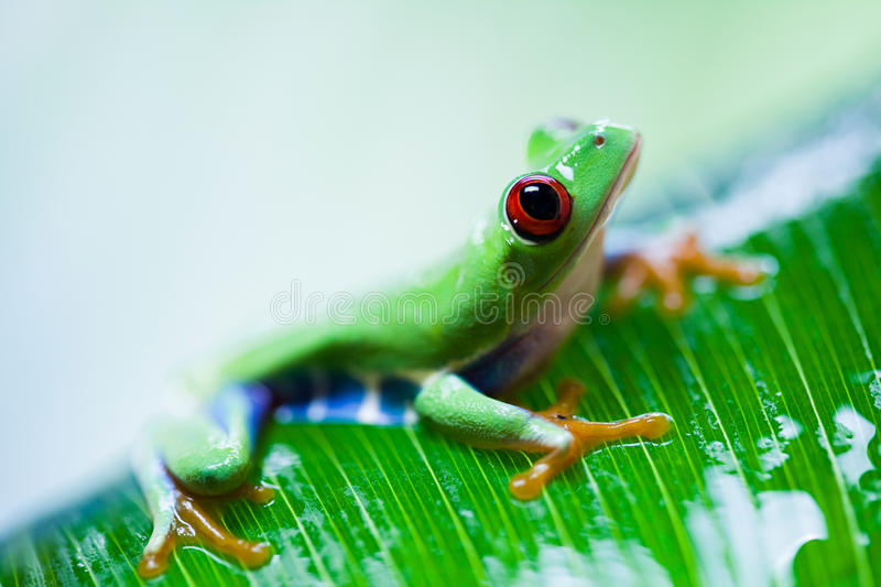 Exotic frog on colorful background.  stock photos