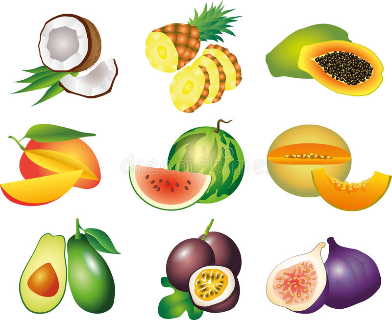 Exotic fruits photo-realistic set. Exotic fruits photo-realistic detailed set vector illustration
