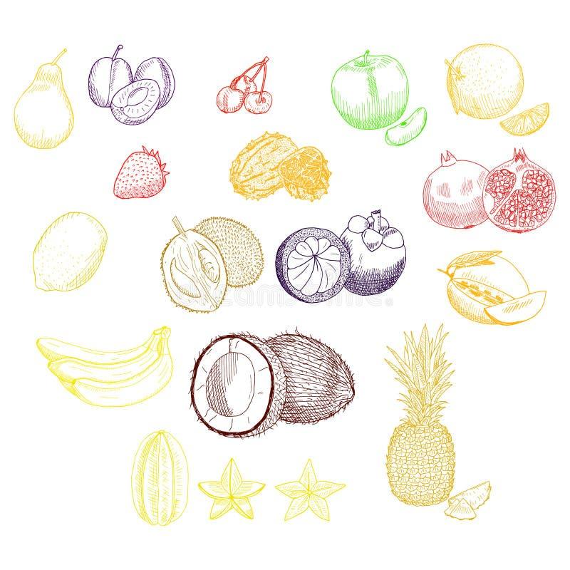 Exotic fruits set royalty free stock image