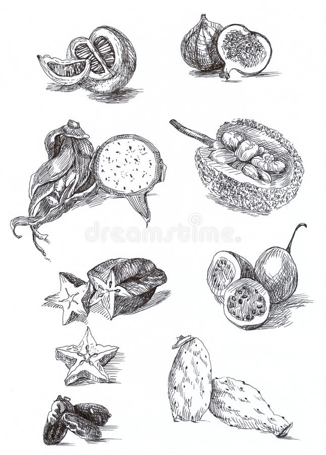 Download Exotic Fruits And Vegetables Stock Illustration - Illustration of drawing, harvest: 23575433