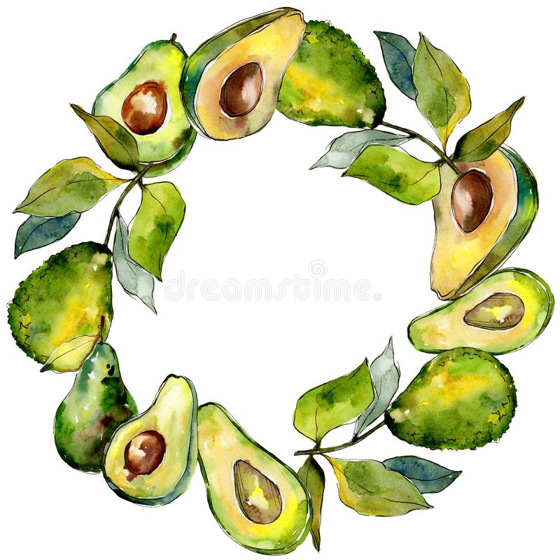 Exotic green avocado wild fruit in a watercolor style frame. royalty free illustration