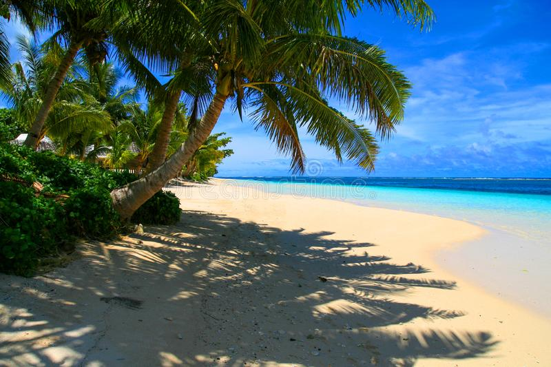 Exotic holidays destination, tropical palm tree above sunny beach with shadow on white sand stock image