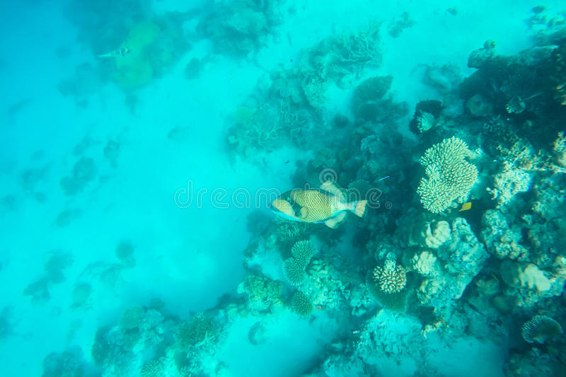 Exotic marine life near Maldives island. Tropical summer vacation concept stock images