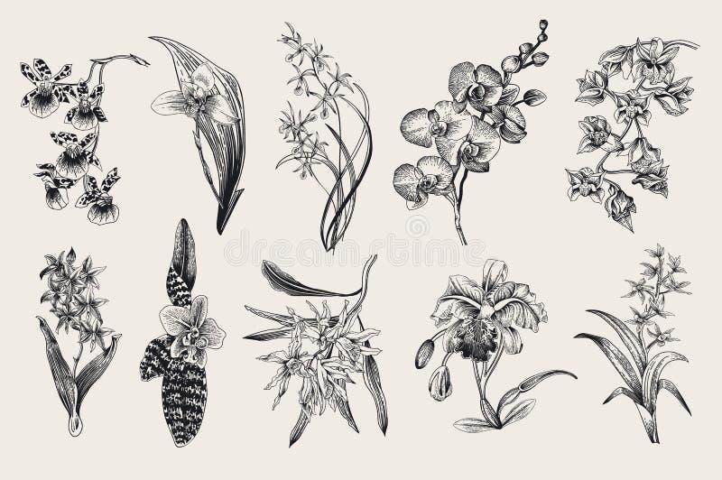 Exotic orchid set. Botanical vector vintage illustration. royalty free illustration