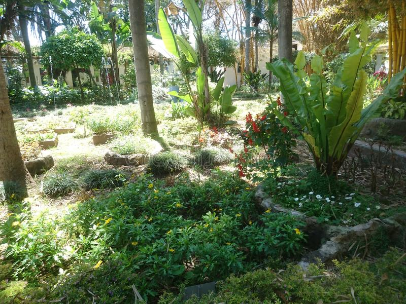 Exotic parc. Kenitra Morocco nature stock photo